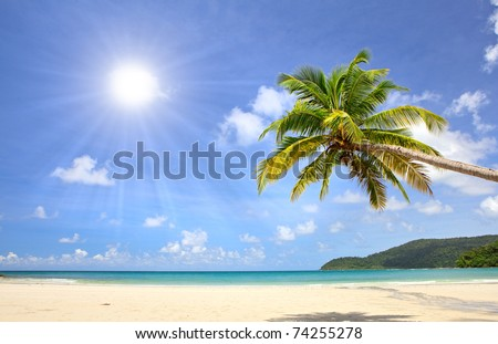 Palm tree over beautiful sandy beach near blue sea. Summer nature view. - stock photo