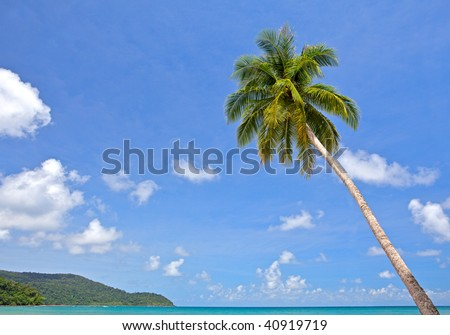 Palm tree over sea water on the tropical beach - stock photo