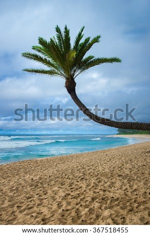 palm tree over the sea. North shore Oahu