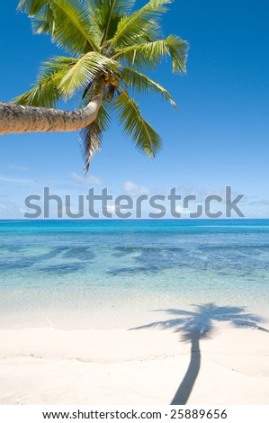 Palm tree over wet beach with shadow - stock photo