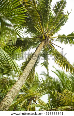 Palm tree, palm branch.