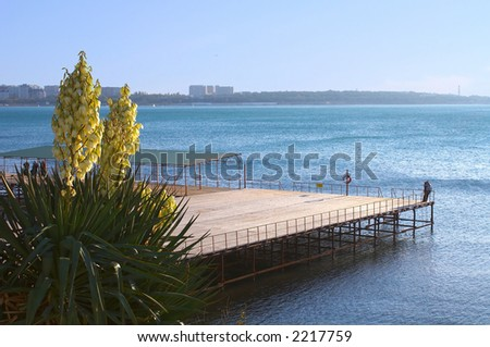 Palm tree, pier, the man and the woman. Romance. - stock photo