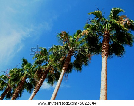 Palm Tree Row againbst blue sky