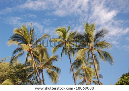 Palm Tree's Hawaii - stock photo