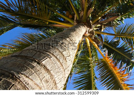 Palm tree, shallow focus - stock photo