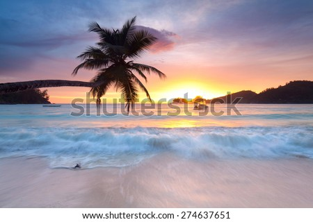 Palm tree silhouette at sunset, Mahe Island on Seychelles, Tropical beach - stock photo