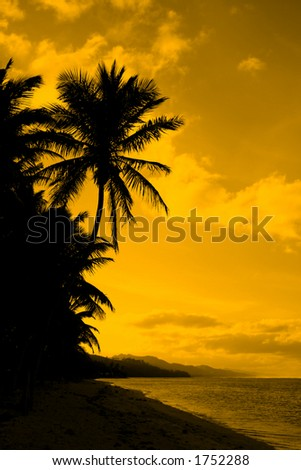Palm tree silhouette. Beach at sunset, golden tone. - stock photo