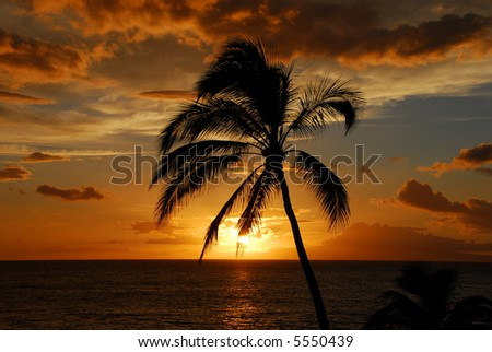 Palm Tree Silhouetted Against A Golden Sunset Sky - stock photo