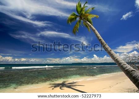 Palm tree ste against blue sky on beautiful island beach - stock photo