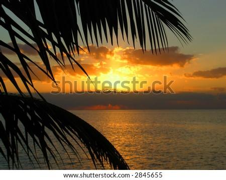 Palm Tree Sunrise in Key West - stock photo