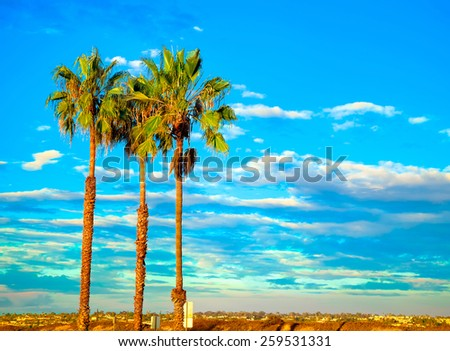 Palm Tree Sunset in San Diego California, USA.  California Tourism