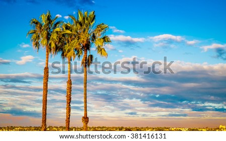 Palm Tree Sunset in San Diego California, USA. California Tourism - stock photo