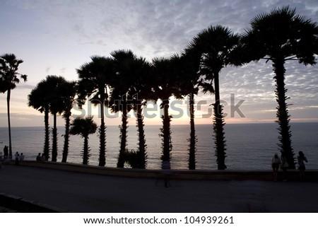Palm tree; Sunset of Palm tree  near the sea. - stock photo