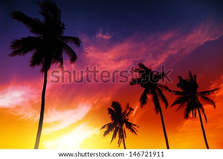 Palm tree sunset on tropical beach - stock photo
