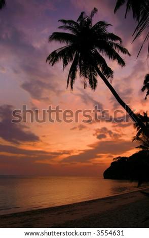 Palm tree sunset on tropical island - stock photo