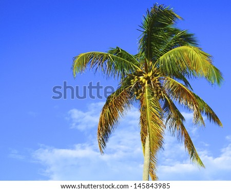 Palm tree swaying in the wind under a beautiful blue sky - stock photo