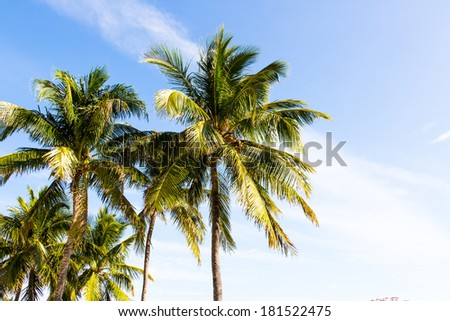 Palm tree top on a sunny day with a cloudy blue sky
