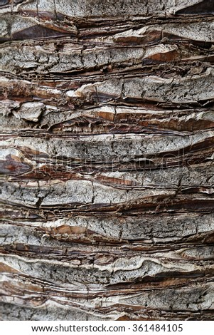 Palm tree trunk background      - stock photo