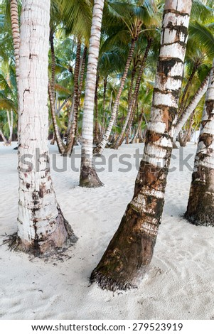 palm tree trunks on white sandy beach