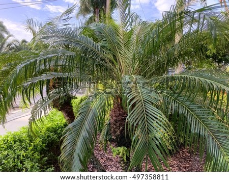 Palm Tree up close