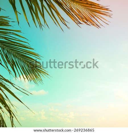 Palm tree, Vintage light leak filter effect - stock photo