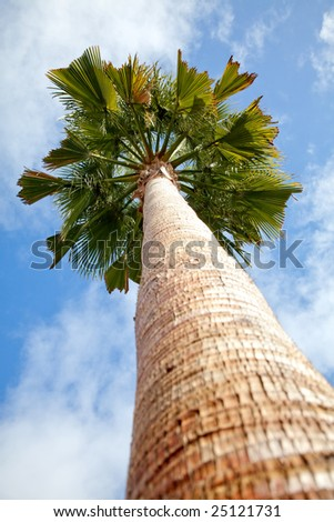 Palm tree with a clear blue sky in the background
