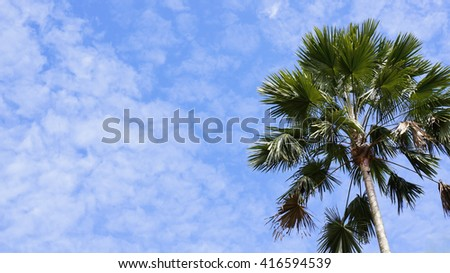 Palm tree with blue sky background - stock photo