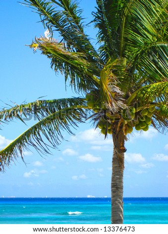 Palm Tree with Cozumel Island in the distance - stock photo