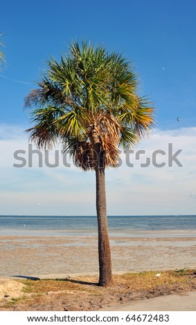 Palm tree with the beach, the moon and an airplane in the background, St. Pete, Florida - stock photo