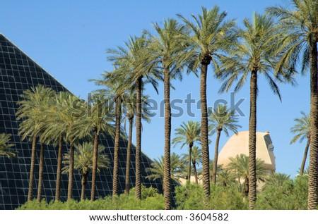 Palm Trees 1 - stock photo