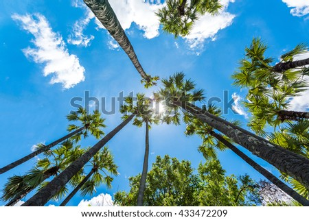 palm trees against a blue sky - stock photo