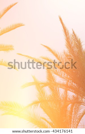 Palm trees against sky. retro style image. travel, summer, vacation and tropical beach concept. - stock photo