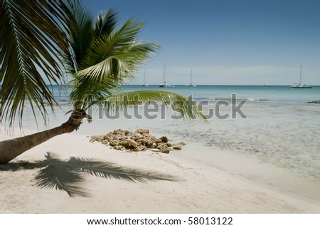 Palm trees along a tranquil and exotic Caribbean beach. - stock photo