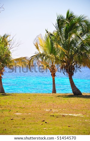 Palm trees along the bay of pigs, Cuba - stock photo