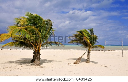 Palm Trees and a Volleyball Net on a Deserted Island Beach - stock photo