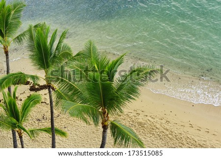 Palm trees and blue green water, serene sandy beach in Waikiki, Hawaii - stock photo