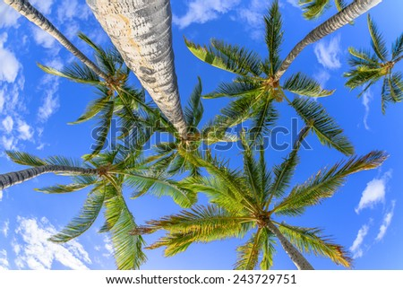 Palm trees and blue sky - stock photo