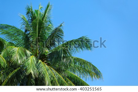 Palm trees and blue sky. - stock photo