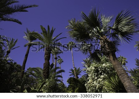 Palm trees and cacti in Morocco - stock photo