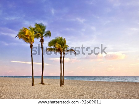 Palm trees  and Colorful landscape of sunrise at Tropical summer paradise in Miami Beach Florida and Atlantic ocean in the background , with pristine sands and cloudy sky - stock photo