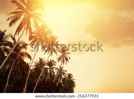 Palm Trees And Colorful Sunset - stock photo