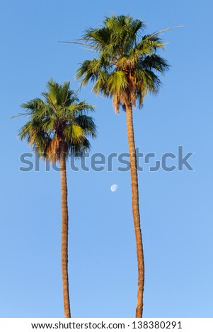 Palm Trees and Moon, Palm Springs, CA