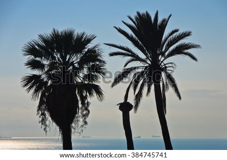Palm trees and ships in background near Cagliari harbor, Sardinia, Italy - stock photo