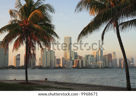 Palm trees and the Miami skyline during late afternoon. - stock photo