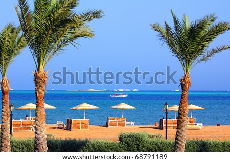 palm trees and tropical beach in Egypt - stock photo