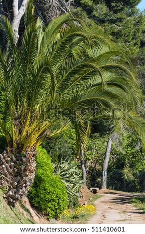 Palm trees yellow flowers nature park stock photo royalty free palm trees and yellow flowers in nature park mightylinksfo