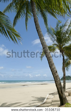 Palm trees ashore. A tropical landscape.