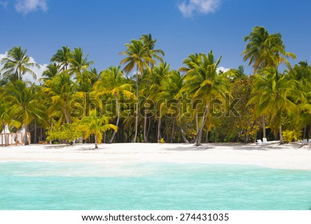 Palm trees at blue lagoon on caribbean wild beach in Dominican Republic - stock photo