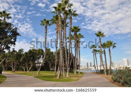 Palm Trees at Coronado Island in San Diego, California