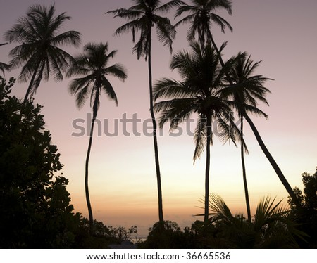 Palm trees at dawn - stock photo